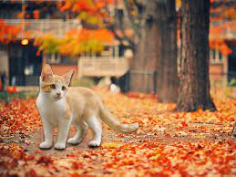 Thanksgiving Cat Desktop Wallpapers ...