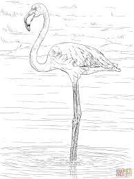 Flamingos Kleurplaten Gratis Printbare Kleurplaten Regarding