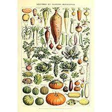 Gourd Identification Chart Vintage Poster Print Art Kitchen Vegetable Identification Reference Chart Botanical Science Plant Carrot Pumpkin Potato Home Wall Decor 20 87 X