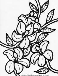 Small Picture Hawaiian Flower Coloring Pages GetColoringPagescom
