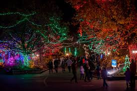 Indianapolis Zoo Lights Indianapolis Zoo Nominated For Best Zoo Lights In The