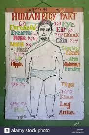Human Body Parts Chart In Shashemene Jamaican School Oromia