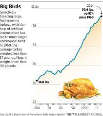 Average turkey weight at slaughter, according to the usda (alexis madrigal). Talking Turkey Why Your Thanksgiving Dinner Weighs More Wsj