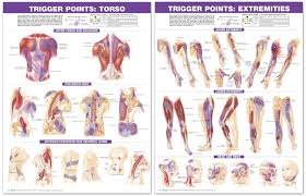 Trigger Point Anatomical Chart Set Torso Extremities 2nd Edition