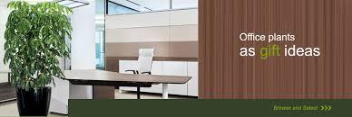 Interior office plants Draping Schefflera Office Plant Toronto Office Plants