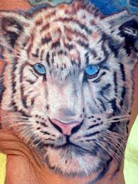 white tiger with blue eyes tattoo. Contemporary Eyes On White Tiger With Blue Eyes Tattoo C