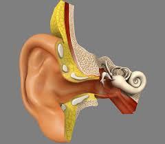Орган слуха строение функции заболевания методы лечения