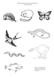 Winter Animal Worksheets Worksheets for all | Download and Share ...