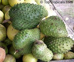 TopTropicalscom  Rare Plants For Home And GardenAnnona Fruit Tree