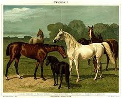 Horse Size Comparison Chart List Of Horse Breeds Wikipedia