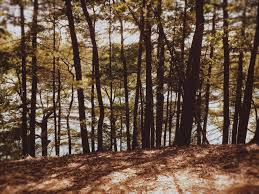 a tribute to walden pond deliberate wanderer i crunch through leaves and smell wet bark at walden pond in concord massachusetts yellow and crimson leaves line the path and cluster at the edges of the