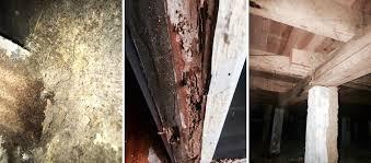 termitedamage jpg