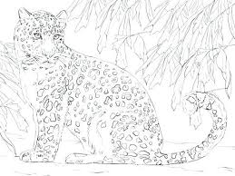 Leopard Coloring Pages Snow Page Free Download Fine Picture Cub