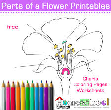Small Picture Seed to Plant Coloring Worksheet