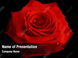 Rose Red Powerpoint Template Rose Red Powerpoint Background