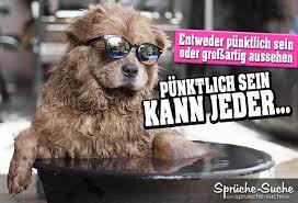 Gut Aussehen Sprüche Hund Mit Sonnenbrille Sprüche Suche
