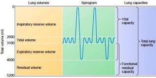 Normal Lung Volumes And Capacities Chart Lung Volumes And Capacities Owlcation