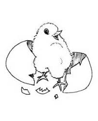 Small Picture baby chicks Colouring Pages baby chicken coloring pages isrs2011