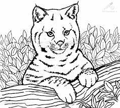 Kleurplaat Dieren Leeuw Leeuwen Welpjes