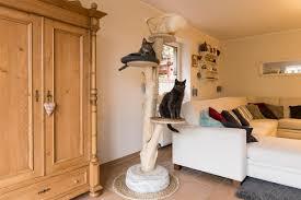Kratzbaum Für Die Katze Selber Bauen Anleitung