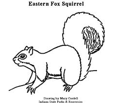 Small Picture Free Printable Squirrel Pattern Coloring Coloring Pages