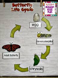 Butterfly Life Cycle Lessons Tes Teach