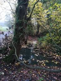 DCRT's Autumn/Winter Photo Competition - Winners and full-gallery - Don  Catchment Rivers Trust