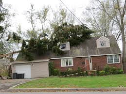 Tree Removal and the 10 Critical Things You Need to Know