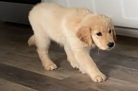 Zuckersüß: Hund scheitert bei witzigem Überraschungs-Angriff   TAG24