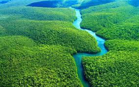 amazon rainforest wallpaper hd for desktop