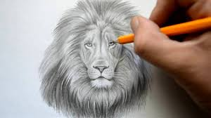 lion drawing. Unique Drawing Throughout Lion Drawing B