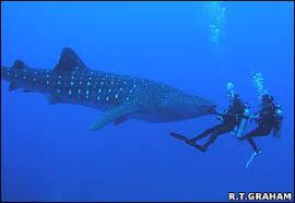 Image result for shark eggs