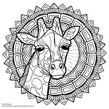 Giraffe Free Colouring Page By Dottymay