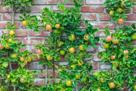 Homelife  How To Grow Fruit TreesFruiting Trees