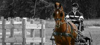 horse and carriage instant quote