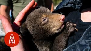Climb into the Bear Den with GrizKid - YouTube