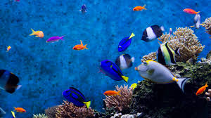 animated moving fish wallpapers. In Animated Moving Fish Wallpapers