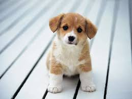 cute dogs and puppies. Modren And I GOT THE CUTEST DOG EVER  CUTE DOG PUPPY Throughout Cute Dogs And Puppies L