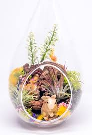 Air Plant Terrarium Air Plant Terrarium Kit Nature Series Bunny Hideaway Nautical