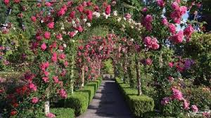 butchart gardens tours.  Gardens Flowers Arched Over Pathway At Butchart Gardens In Vancouver  Inside Tours