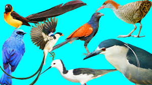 wild bird pictures. Modren Wild Wild Birds List Of The Bird Species 3 And Bird Pictures E