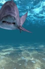 shark attack wallpaper. Wonderful Shark Screenshot Image To Shark Attack Wallpaper A