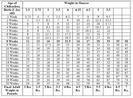 Recommended Weight Chart For Adults Standard Poodle Growth
