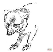 Face Of Arctic Fox coloring page | Free Printable Coloring Pages