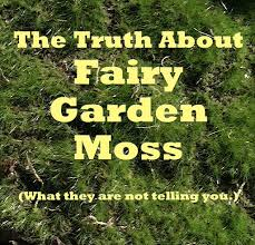 Fairy Garden Moss : What They Won\u0027t Tell You But I Will | The Mini ...