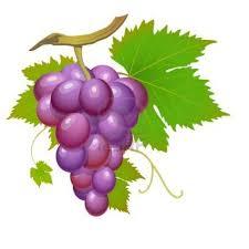 En Couleurs Imprimer Nature Fruits Raisin Num Ro 169776