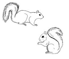Small Picture 283 best Squirrels images on Pinterest Squirrel Animals and