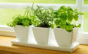 Hydroponic Kitchen Herb Garden 7 Tips For Growing An Herb Garden In Your Kitchen