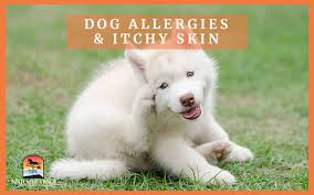 Cetirizine Dog Dosage Chart How To Use Zyrtec For Dog Allergies
