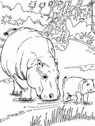How To Draw Baby Hippo Coloring Pages For Kids Creativity And Page